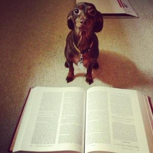 Chaucer the Dog reading Canterbury Tales by Chaucer the Poet